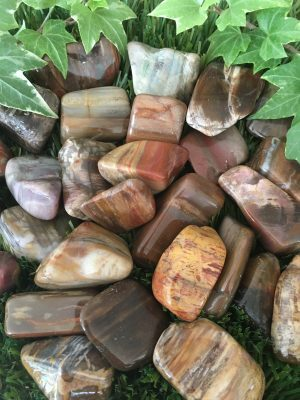 Petrified Wood Tumblestones
