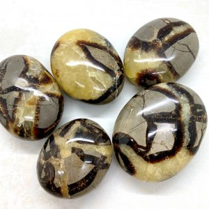 Septarian Palm Stones Dragon Palms