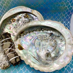 Abalone Shells – Large