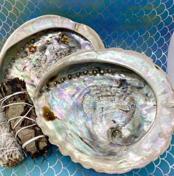 Abalone Shells – Large