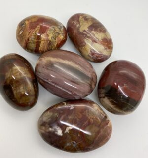 Petrified Wood Palm Stones